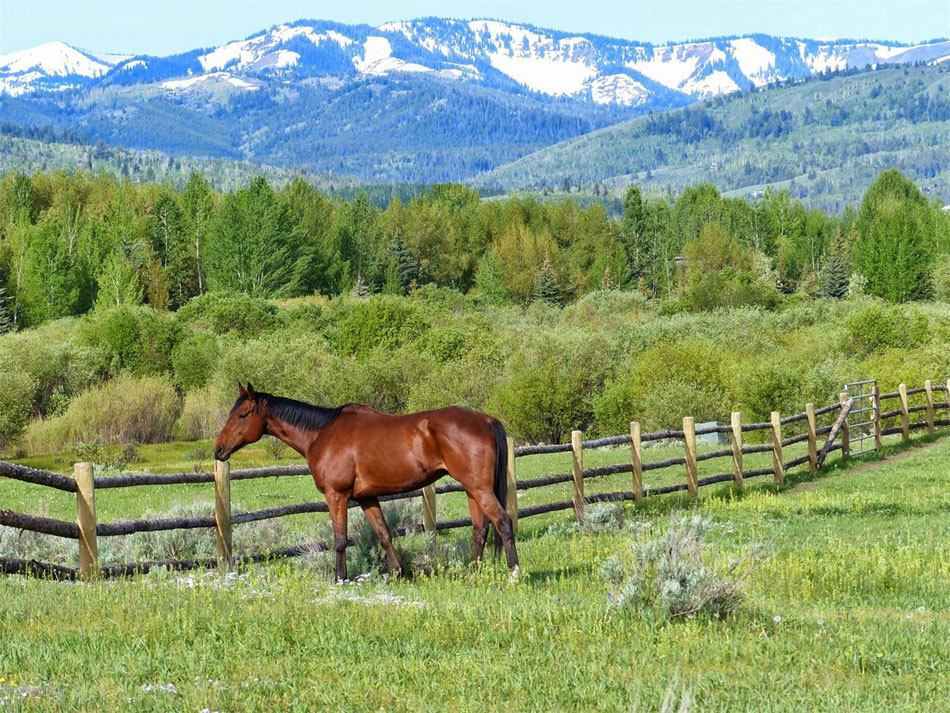 This 34.9 acre property is only minutes to downtown Jackson, the 3 Creek Ranch & Golf Club and adjoins the Melody Ranch. The Melody Ranch is a working cattle ranch and is the home of the Jackson Hole Polo Club.This private settling is accessed via it's private bridge across Flat Creek.