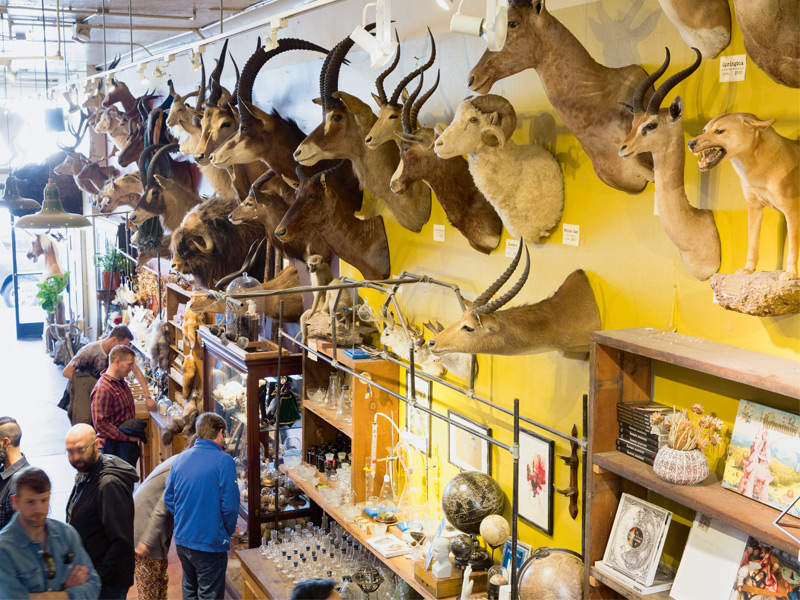"""Some of Paxton Gates's beloved """"treasures and oddities"""" grace its walls. Photograph: Jen Siska"""