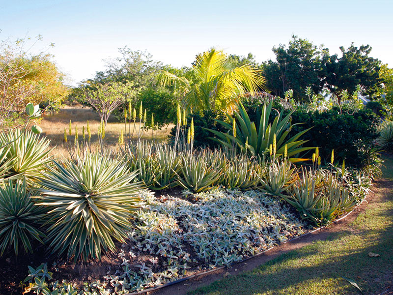 In the Caribbean, Julie Toll's increased use of native plants, which are better adapted to the region's tropical storms, is just one example of more sustainable garden design. Photograph: Jane Sabire/Design: Julie Toll