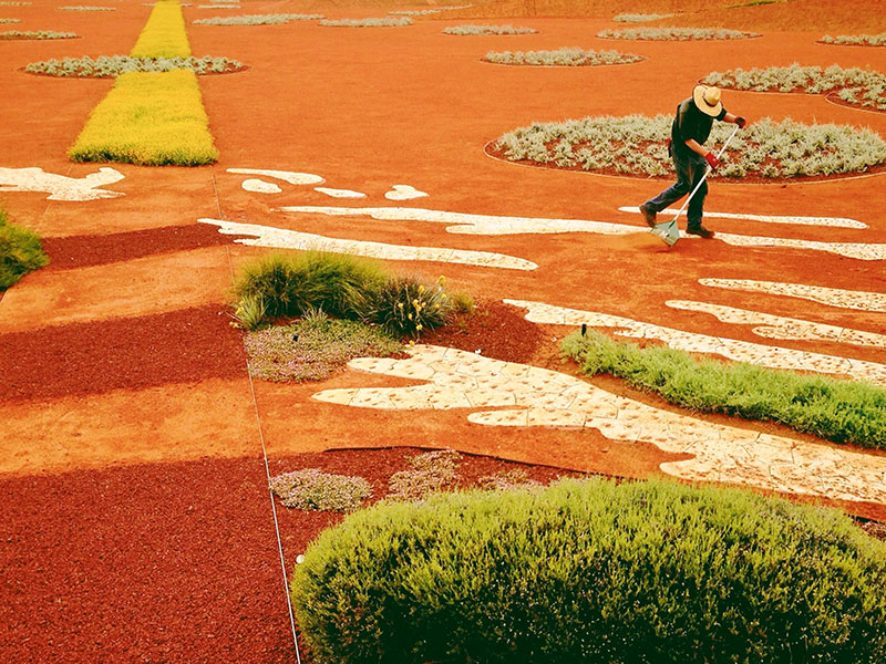Landscape architects at Taylor Cullity Lethlean are responding to Australia's natural environment by creating drought-resistant gardens like this one at the Royal Botanic Gardens in Cranbourne, Victoria. Photograph: Greg Briggs/Design: Taylor Cullity Lethlean