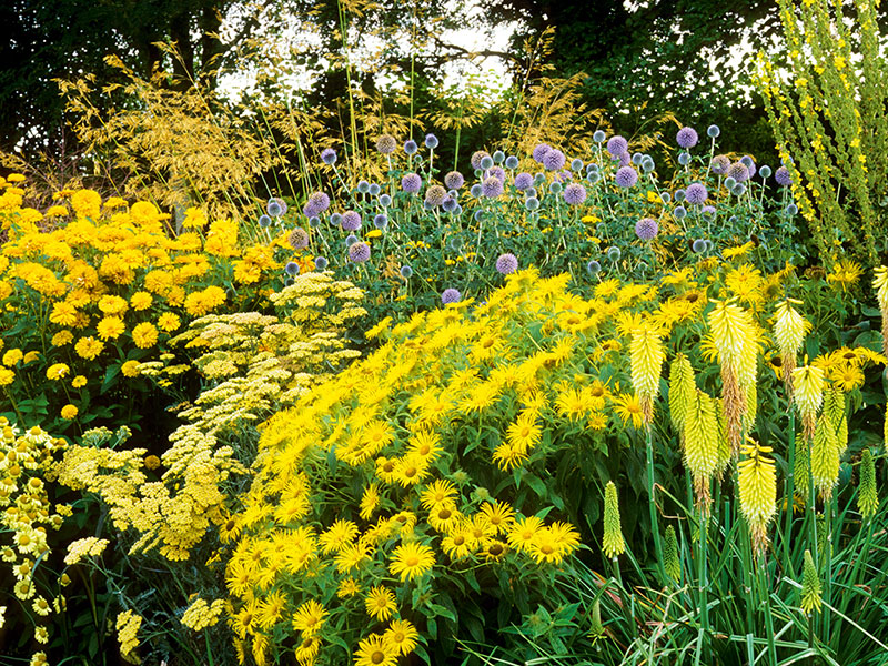 "Just as certain colors are ""in"" when it comes to clothes, the most fashionable gardens look set to be dominated by yellow this year and next. Photograph: Marianne Majerus/Tanglefoot, Hampshire"