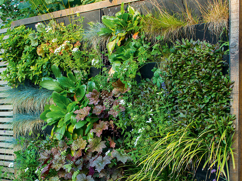 If it's well tended, a living wall will always look great in your garden. Photograph: Marianne Majerus/Design: Miles Raybould