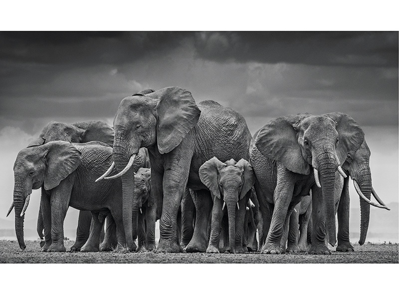 David Yarrow travelled to the Amboseli National Park on the Kenyan/Tanzanian border to work close to elephants as they crossed a dry lake in search of water. <i>The Circle of Life</i> captures the grace and serenity of the moment. Photograph: ©David Yarrow Photography