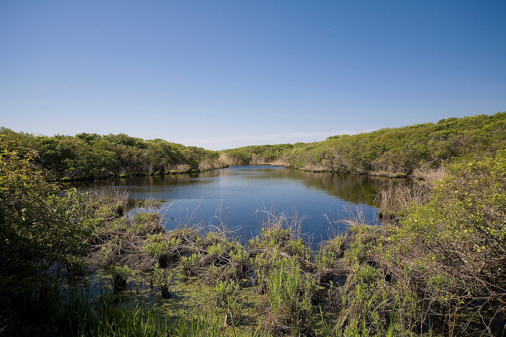 The property includes a scenic two-acre pond which forms a habitat for indigenous flora and fauna.