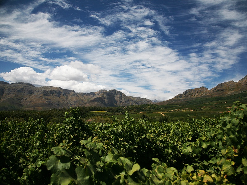 """South Africa's Cape region is set to become one of the most sought-after wine destinations. """"It's a very beautiful part of the world: serene vineyards backed by dramatic mountain ranges, a spectacular coastline nearby,"""" says David Elswood, International Head of Wine at Christie's."""