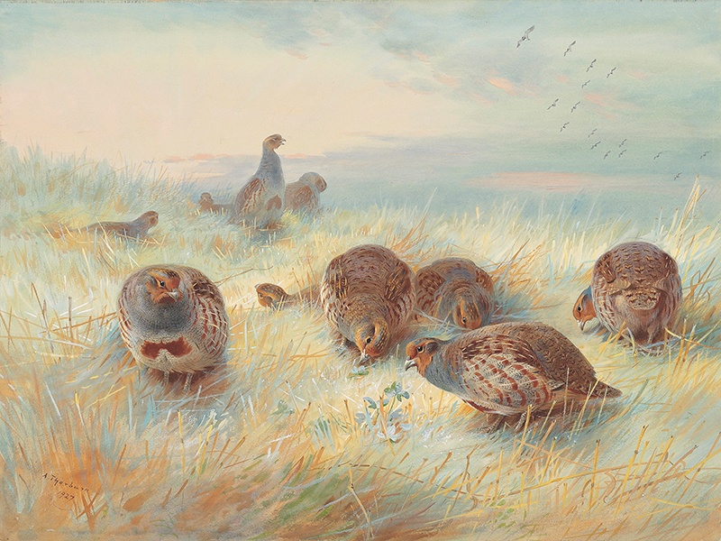 <i>A Frosty Dawn</i>, dating from 1927 (estimate £50,000–£70,000), demonstrates Archibald Thorburn's extraordinary handling of light and ability to capture the natural movement of birds. Image: Christie's Images Ltd. 2017. Banner image: The Tillypronie estate.
