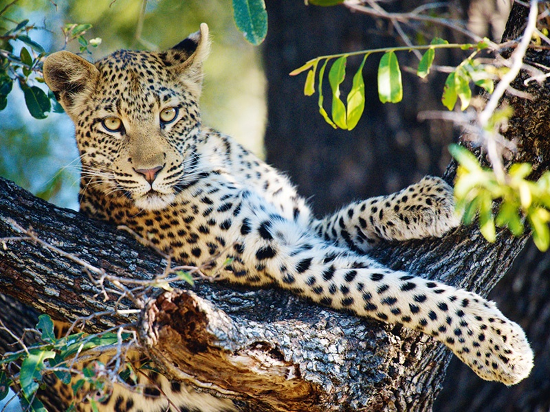 Discover Africa's iconic wildlife in the Serengeti, accompanied by experienced safari guides.