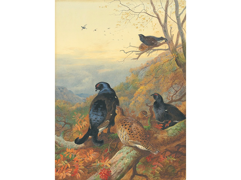 Another of Archibald Thorburn's atmospheric masterpieces is <i>Blackgame in the Glen</i> (estimate £70,000–£100,000). Thorburn was one of the most sought after ornithological artists of his day. Image: Christie's Images Ltd. 2017