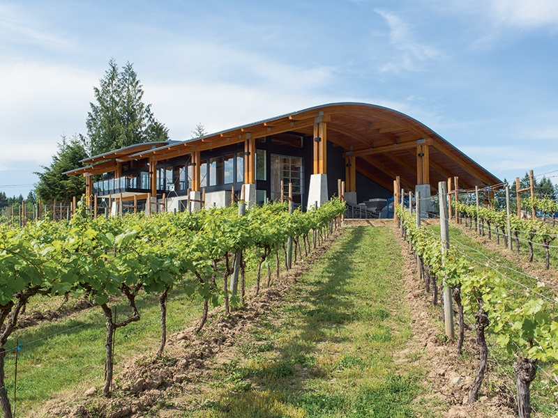Benefiting from the cool maritime Mediterranean climate in Vancouver Island's Cowichan Valley, Blue Grouse Estate Winery crafts white, red, and sparkling wines that aim to capture the character of the environment. Photograph: Derek Ford