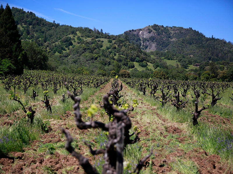 Vinca Minor's Caballo Blanco vineyard in Mendocino produces its organic Old Vine Carignan from 70-year-old vines.