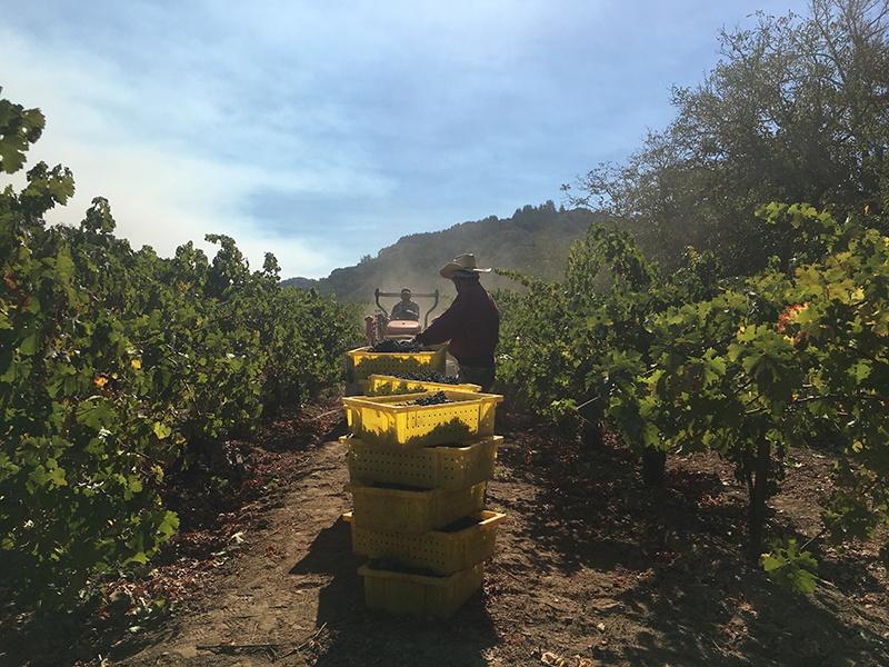 The lush mountain terrain in California's Santa Cruz Mountains is ideal for producing high-toned Cabernet Sauvignon wines.