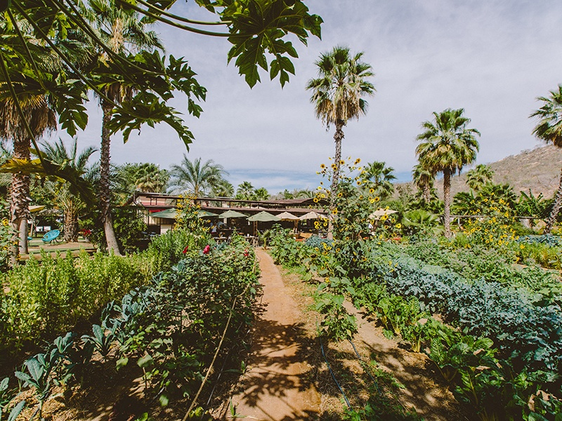 Only food grown and raised at Flora Farm is served at its Field Kitchen, which turns into Mamas pizzeria in the evening and for Sunday brunches.