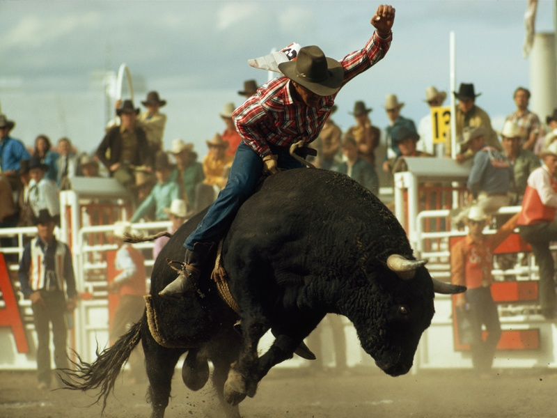 Bullriding at the Calgary Stampede tests the mettle of cowboys, and epitomises the high-energy atmosphere of the festival. Photograph: William Albert Allard