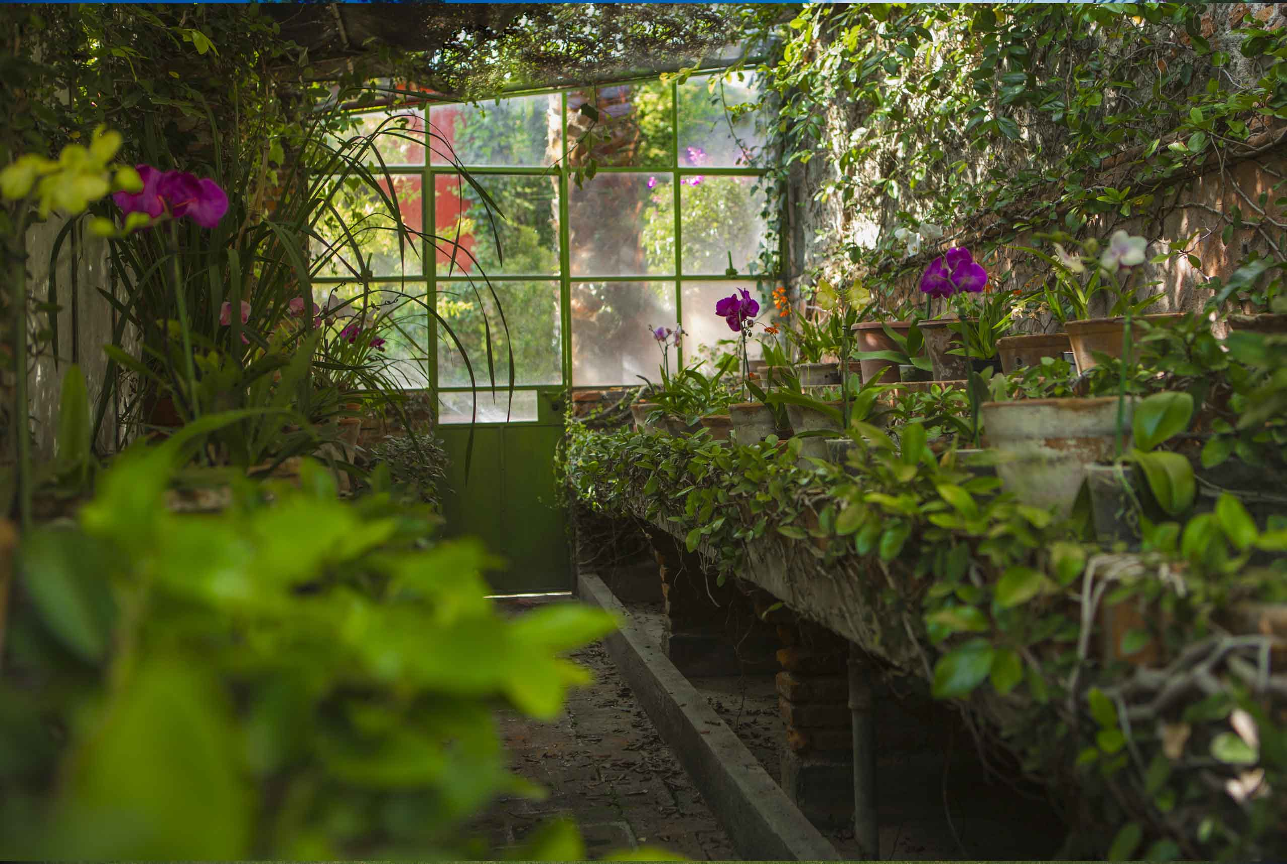 A lush greenhouse is a special botanical haven for plant lovers in this San Miguel setting.