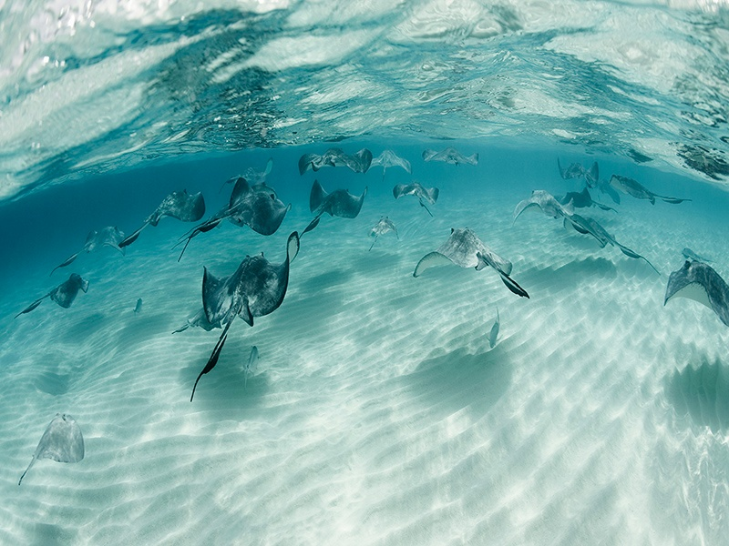Whether it's swimming with stingrays or exploring sunken shipwrecks, Grand Cayman has much to offer keen snorkelers and scuba divers. Photograph: Robert Harding
