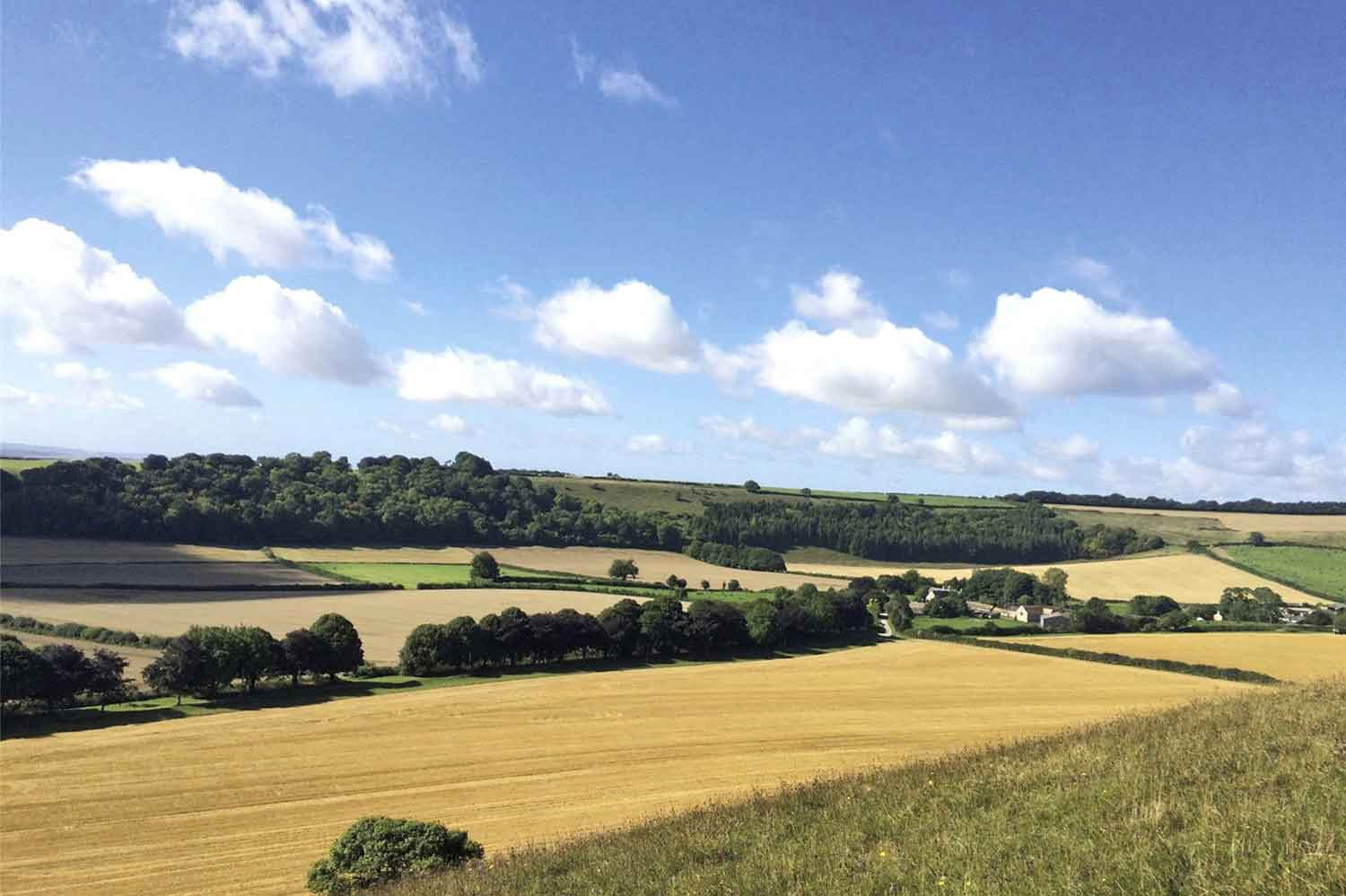 Melcombe Farm, in the beautiful English county of Dorset, encompasses 492 acres of land composed of arable fields, pastures, and woodland, with a fine period farmhouse, four cottages, and modern farm buildings.