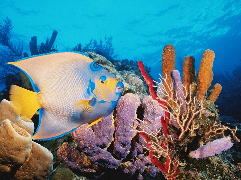 Belize's Barrier Reef is a multi-hued paradise for nature-loving snorkelers and scuba divers. Photograph: Getty Images
