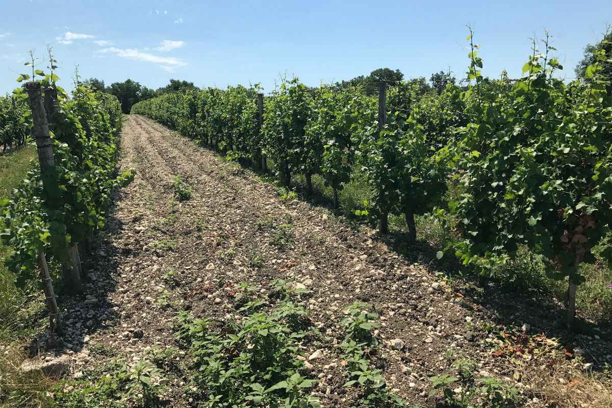 This Bordeaux vineyard has a gravel-rich soil, which supports red grape varieties such as Cabernet Sauvignon.