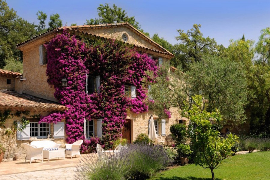 In the climate of the Côte d'Azur, flowering plants, vines, and tropical pine trees thrive, adding color and life to the landscape.