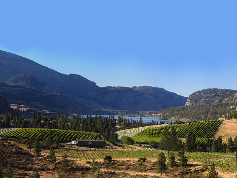 Liquidity Wines' grapes are all estate-grown and hand-harvested, in terroir ideal for Chardonnay and Pinot Noir. Banner image: Phantom Creek's Sundial Vineyard in the Okanagan Valley.