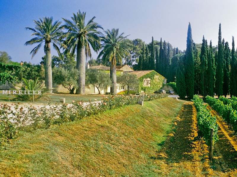 Clos Mirelle, one of three estates owned by the esteemed Domaines Ott, is located close to the coast. Photograph: Alamy