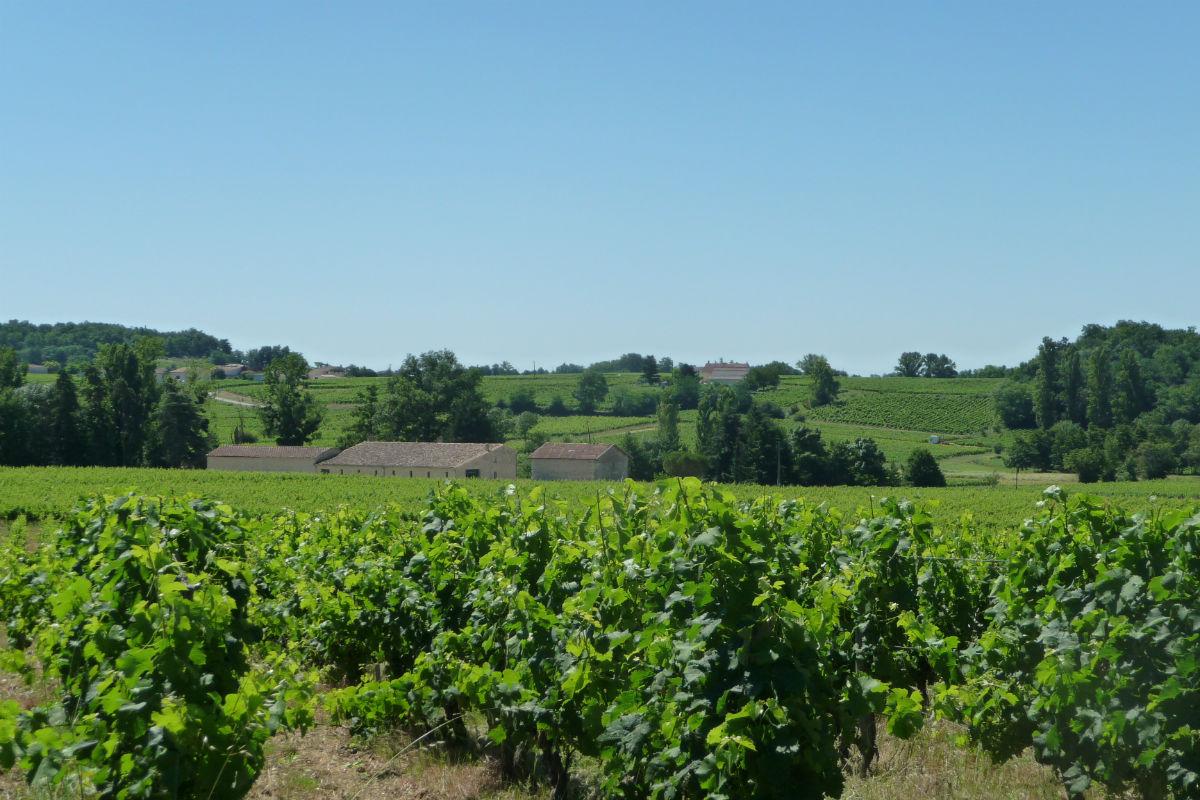 This Saint-Émilion satellite vineyard was recently sold by Vineyards-Bordeaux.
