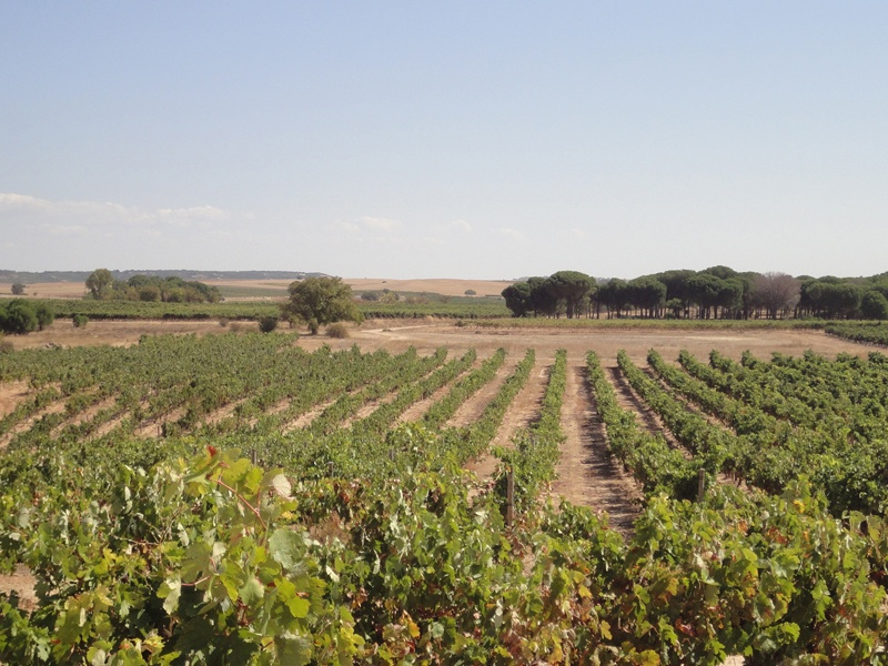 Vineyards at a winery located in Ribera del Duero DO, producing high-quality organic wine; on the market with Rimontgó, an affiliate of Christie's international Real Estate.