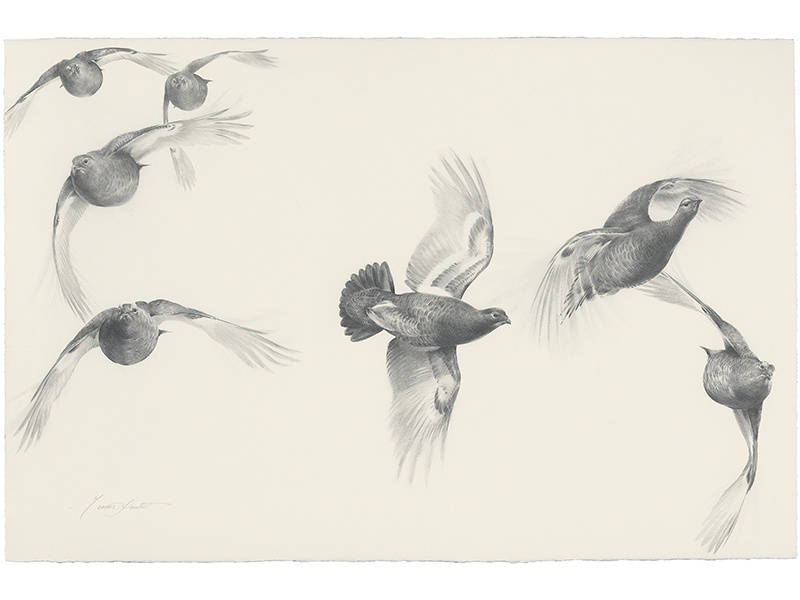 Terence Lambert's graphic pencil work <i>Studies of Red Grouse in Flight</i>, (estimate £800–£1,200), skillfully depicts the shape and movement of birds while in the air. Image: Christie's Images Ltd. 2017