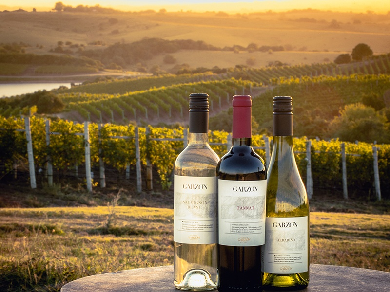 """Three wines of Bodega Garzón: the Tannat red –the grape that """"put Uruguay on the wine map"""" – and the whites, Sauvignon Blanc and the celebrated game changer, Albariño."""
