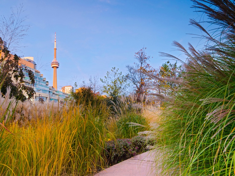 Toronto Music Garden was designed by cellist Yo-Yo Ma and landscape designer Julie Moir Messervy. Photograph: Getty