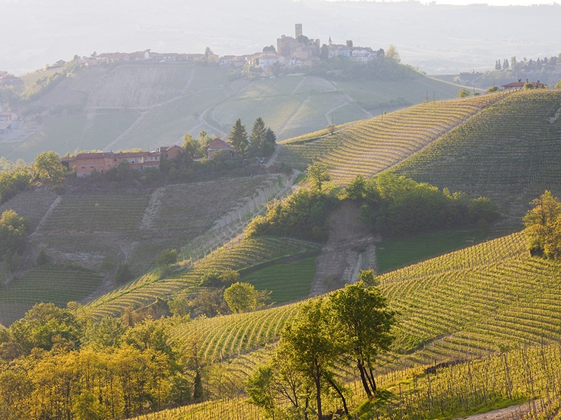 Lazio is one of Italy's great wine-producing regions—and one of its most scenic. Photograph: Alamy
