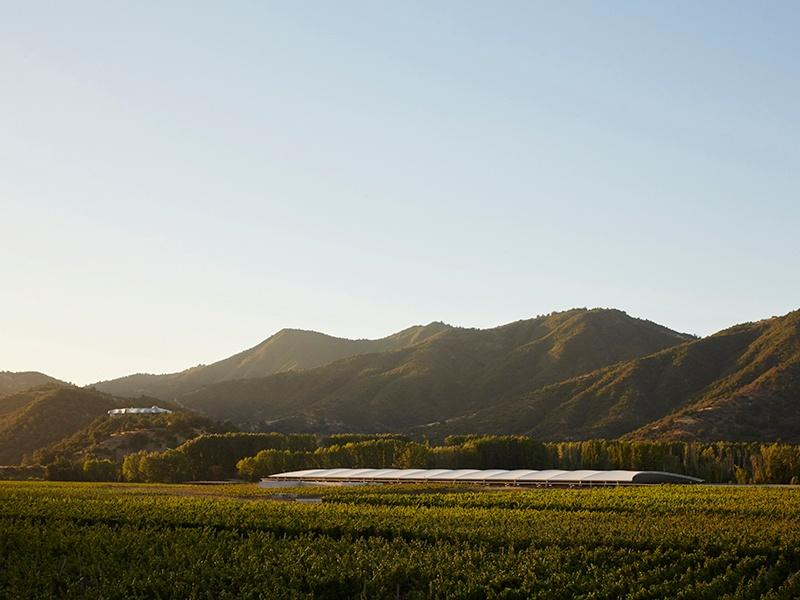 The Viña Vik wine estate, founded by Norwegian-Uruguayan billionaire Alexander Vik, produces one wine, a blend of Cabernet Sauvignon, Carménère, Cabernet Franc, Merlot and Syrah. Photograph courtesy Viña Vik