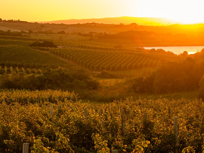 """The trend in South America is to upscale the wine market and become perceived as a place for high quality, not just value,"" says Per Holmberg, Vice President, Head of Christie's NYC Wine Department. Photograph (and banner image): Sara Matthews"