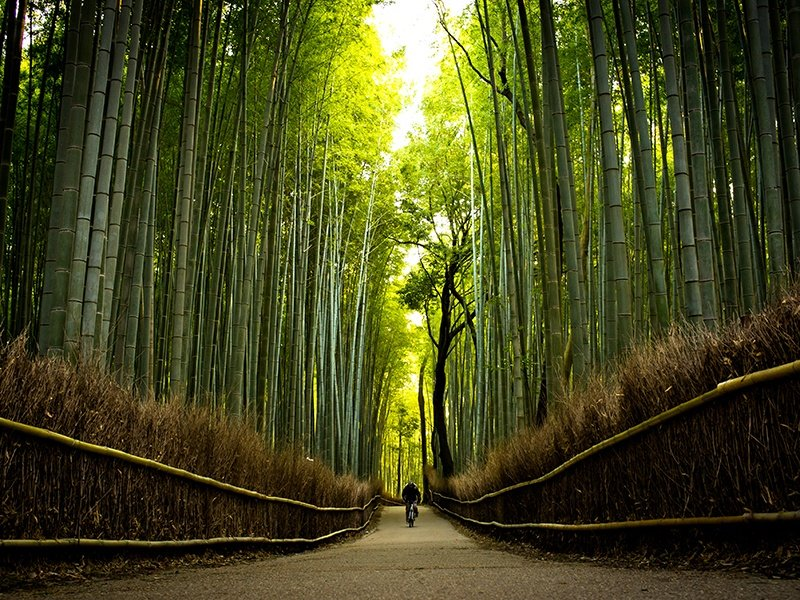 Arashiyama Bamboo Grove offers an otherworldly experience as visitors are dwarfed by the towering, swaying green stalks. Photograph: Getty Images
