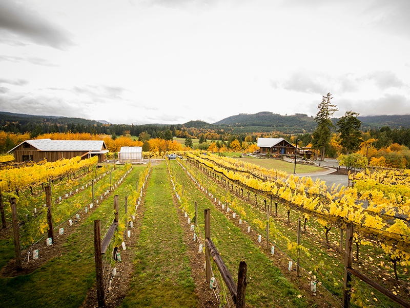 Cowichan Valley wineries such as Blue Grouse cultivate cool-climate varietals like Pinot Noir, Pinot Gris, and Ortega.
