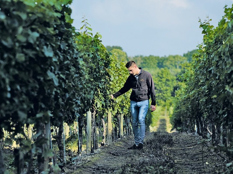 Winemakers from Southeast England's Ridgeview Estate note that the cool climate is crucial for producing full-flavored sparkling wines. Photograph: Christopher Pledger. Banner image: The Rathfinny Wine Estate, established in 2010 in the Sussex South Downs, has ambitions to become one of the largest single vineyards in Europe, with its first wine to be released in 2018.