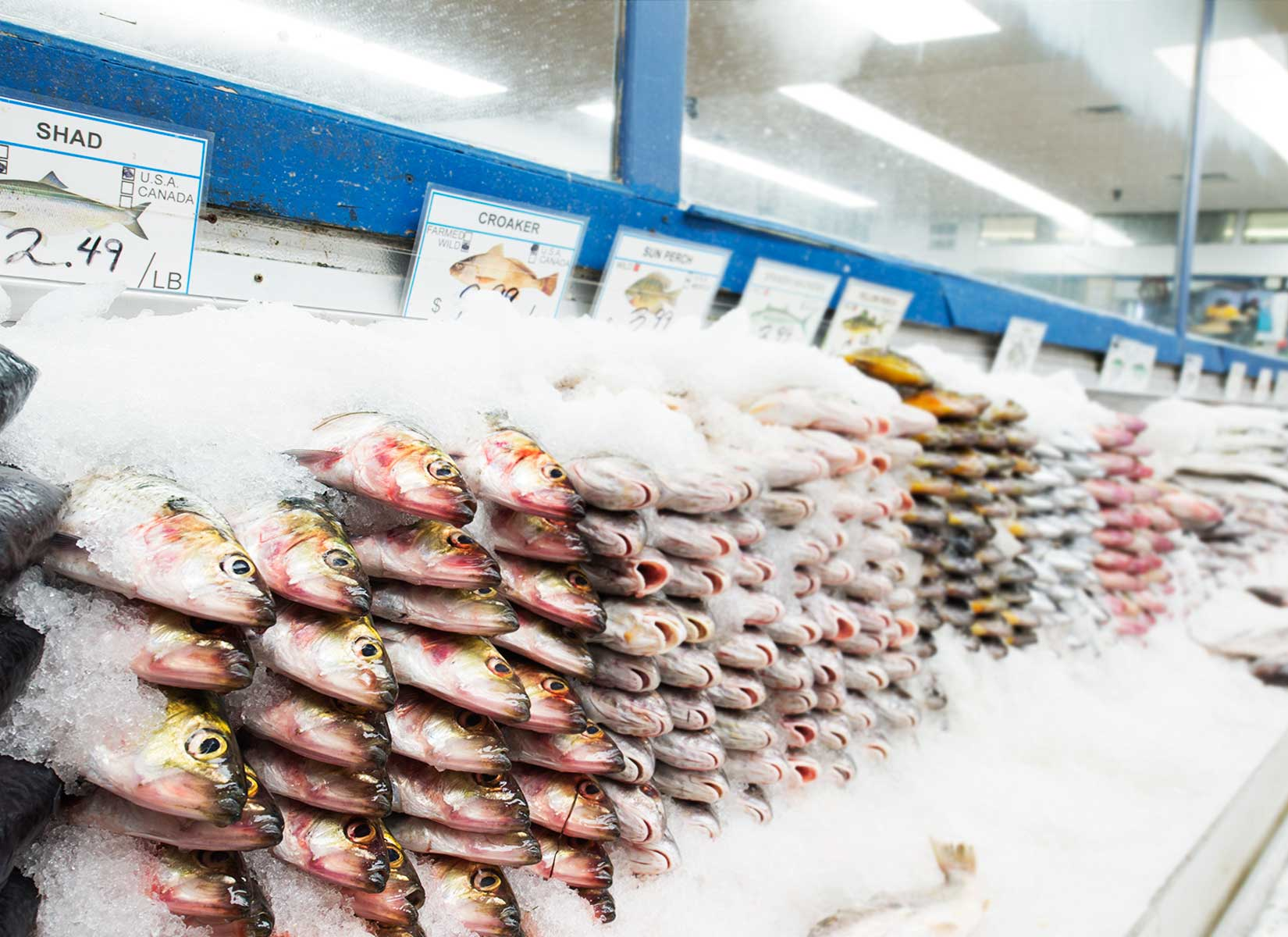 Sea and Sea Fish Market in Harlem