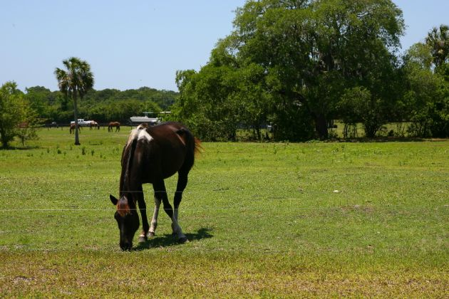 Panther Ridge offers home on sites ranging from 5 to 20 acres, and each brings with it access to the community's beautifully designed equestrian facilities.
