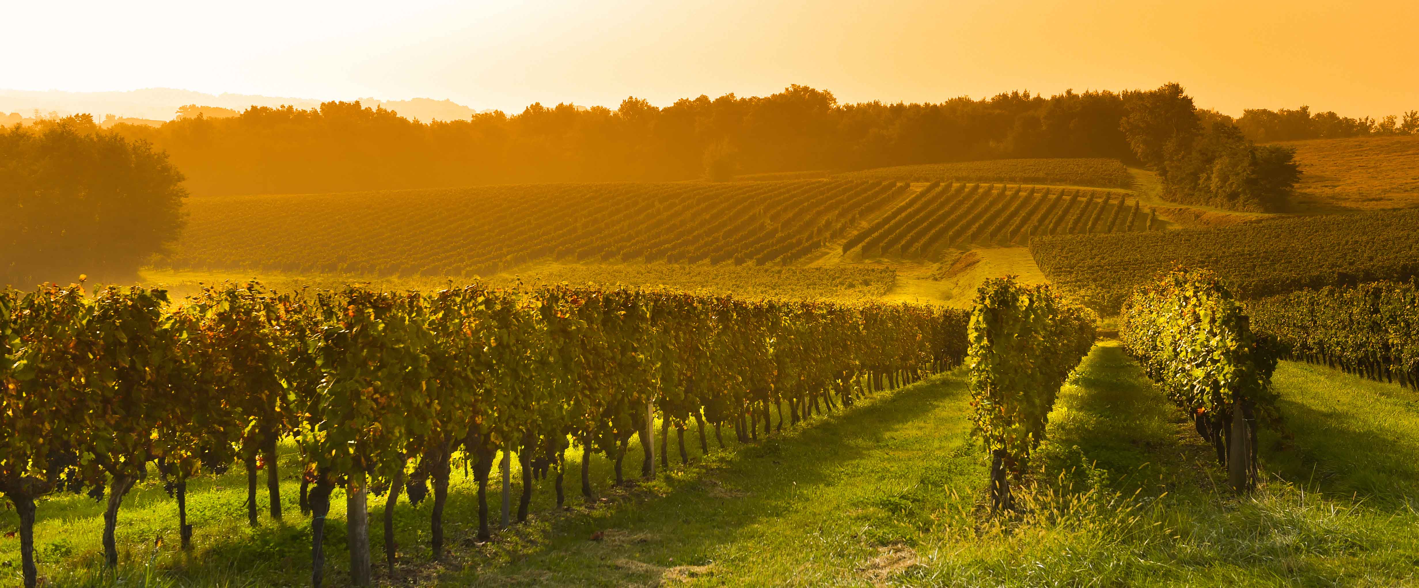 France's largest wine-growing region, Bordeaux's 126,000 hectares of vineyards yield roughly 700 million bottles of wine each year.