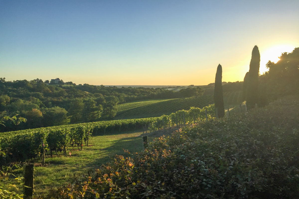 France's largest wine-growing region, Bordeaux's 57 appellations (abbreviated as AOC or AOP) all have distinct characteristics and brand profiles.
