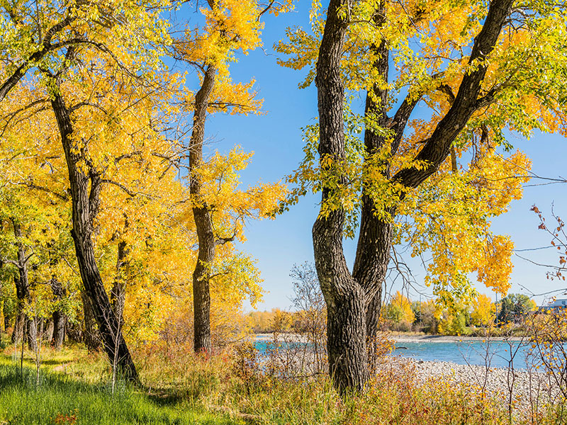 Calgary has large swathes of parkland and other green spaces, with pathways and cycleways that hug the Bow River as it travels through the city. Photograph: Michael Wheatley