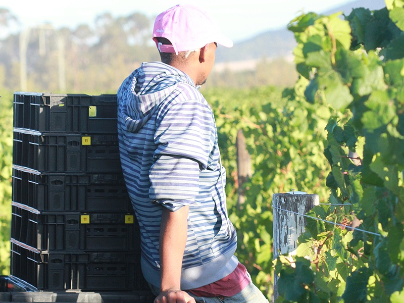 Located in the Paarl region, Vilafonté's vineyards are one of the highest density planted vineyards in South Africa.