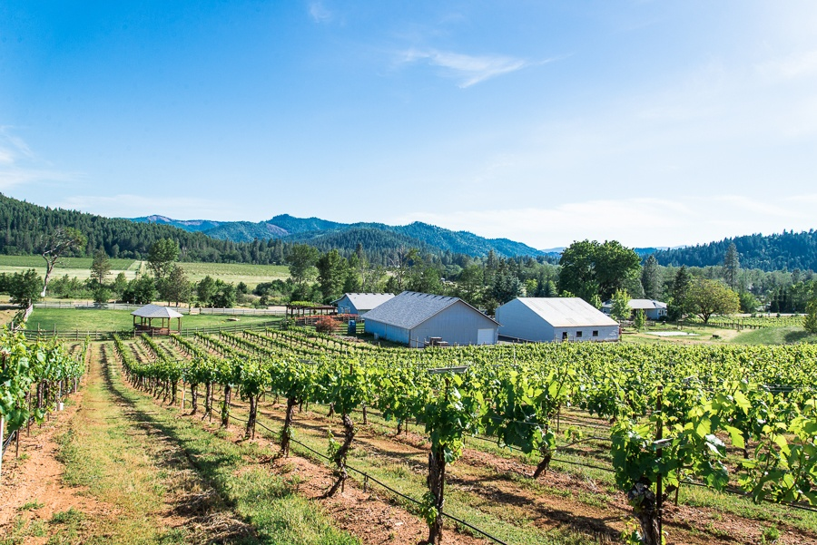 Deer Creek Vineyards & Winery is comprised of more than 70 rolling acres, year round creeks, and spring-fed ponds with vineyard and mountain views in every direction.
