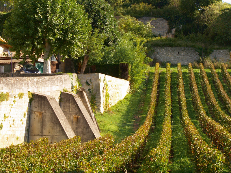 A vineyard in Bordeaux, a popular region for Asian investors. Photograph: Getty