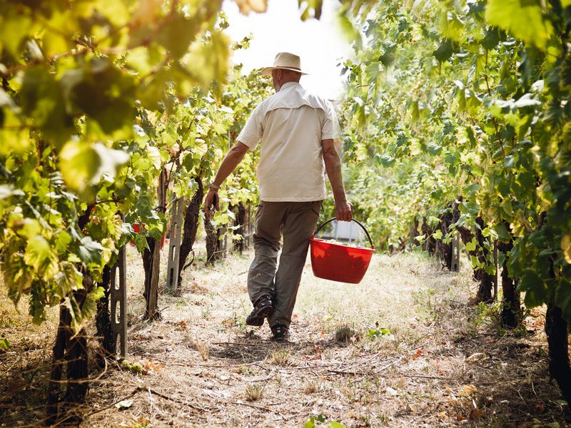 The monetary return on vineyards might not be as lucrative as other investments, but the lifestyle benefits are manifold. Photograph: Getty Images