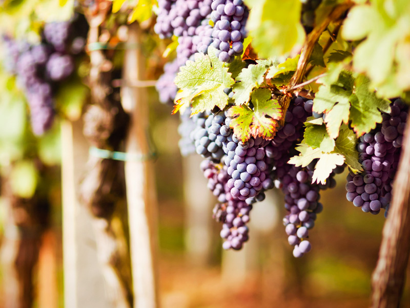 """""""There has never been a better time to buy a wine property in Bordeaux"""" says Michael Baynes of Maxwell Storrie Baynes, an exclusive affiliate of Christie's International Real Estate. Photograph: iStock"""