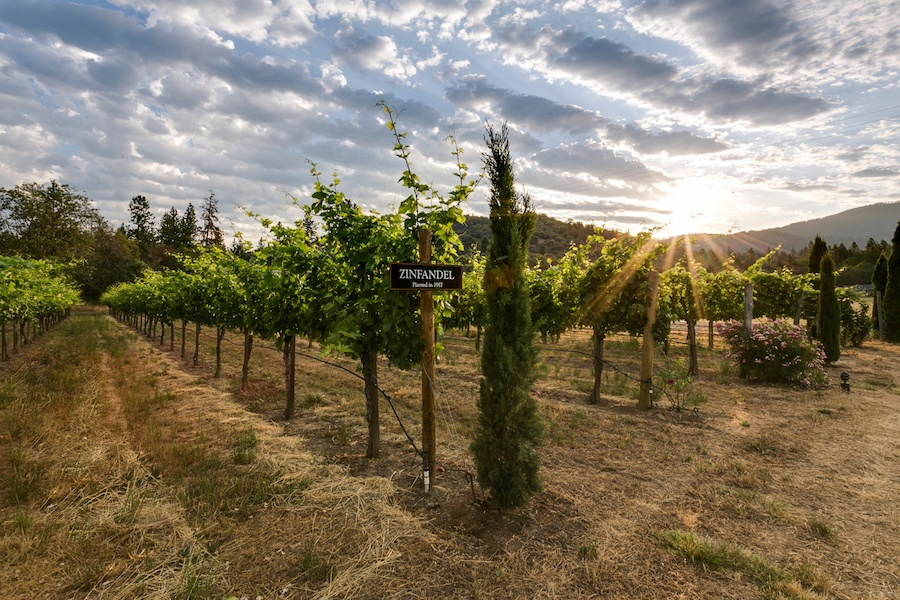 Built by an Oregon wine pioneer and shaped by opportunity, this vineyard is a piece of history with its eye focused on the future.